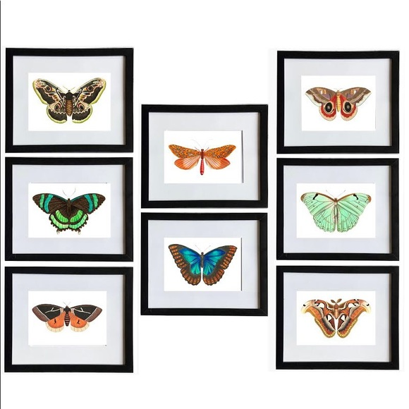8 Horizontal Framed Butterfly Prints